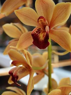 An Orchid from Southern California Spring Garden Show