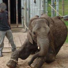 Petizione internazionale per fermare le torture degli elefanti e i massacri delle loro madri in Sudafrica.