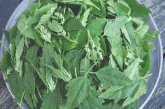 Lettuce, Food Inspiration, Quinoa, Feel Good, Spinach, Food Porn, Vegetables, Health, Plants