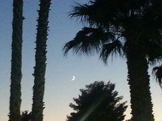 #LasVegas #palmtrees #poolside