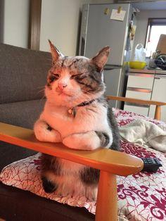 """""""ヒーターに当たるうちの猫ですお納めください。"""""""