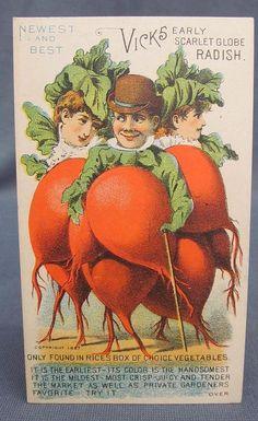 Victorian Trade Card Advertising Vicks Radish Rices Seeds Anthropomorphic Man | eBay
