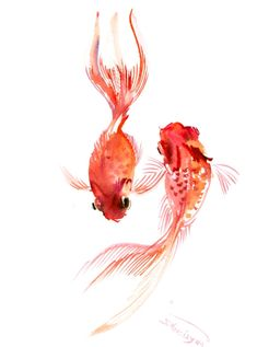 Two Goldfish, Koi fish art, original watercilor asian style painting, feng shui…
