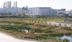 Eco-renovation of Ford plant. William McDonough: Ford Rouge Center Landscape Master Plan, Dearborn, Michigan