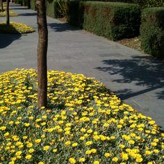 Great idea, another alternative to mulching. Australian Native Garden, Garden, Mulching, House Exterior, Dream Yard, Landscape, Garden Landscaping, Exterior, Mulch Alternatives