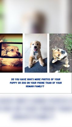 Dog Training Tips, Dog Photos, Dog Owners, Puppies, Dogs, Animals, Cubs, Animales, Animaux