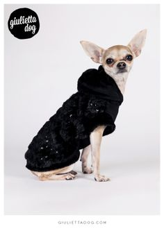 Look at me, i'm fantastic♥! #giuliettalovers #fashionchihuahua #totalblack #happy #style #newcollection #glam