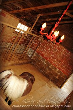 Chandi in the barn