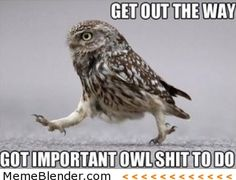 get out the way got important owl shit to do
