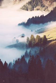 Fog, mountains, trees, my favorite
