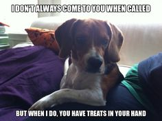 The Most Interesting Beagle In The World