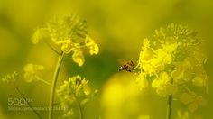 Time for work... by alf2525 #nature #photooftheday #amazing #picoftheday