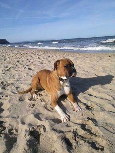 Urlaub mit Hund: OA Rügen