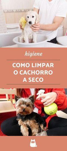 3 opções para limpar o cachorro sem banho, ou com o chamado banho seco! #cachorros #pets #cuidados #banhoseco #banho #limpar #dog