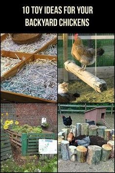 Toys for Your Backyard Chickens Let your chickens have some fun with these 10 inexpensive toy ideas!Let your chickens have some fun with these 10 inexpensive toy ideas! Chicken Garden, Backyard Chicken Coops, Diy Chicken Coop, Backyard Farming, Chickens Backyard, Small Chicken Coops, Chicken Coop With Run, Chicken Run Ideas Diy, Inside Chicken Coop