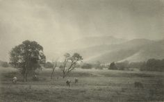 The evergreen valley of the Macquarie, New South Wales, (pre 1928) by Harold Cazneaux   (New Zealand, Australia 30 Mar 1878 – 19 Jun 1953)