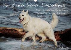 Vom Zauber weißer Schäferhunde 2016 Betörende Schönheit des Weißen Schäferhund nmöglich, seiner weißen Magie zu widerstehen! – Lassen Sie sich von der betörenden natürlichen Schönheit des Weißen Schweizer Schäferhundes verzaubern! Begleiten Sie ihn das ganze Jahr und genießen Sie die Bilder seiner Lebensfreude und Anmut durch die Jahreszeiten!Schenken Sie sich unvergeßliche Momente und lassen Sie sich in die verzauberte Welt des Schweizer Weißen Schäferhundes entführen. Erliegen Sie der…
