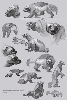 S art animal drawing reference animal sketches, an Wolverine Animal, Wolverine Art, Animal Sketches, Animal Drawings, Art Drawings, Sailor Neptune, Wolverine Tattoo, Animal Anatomy, Sketch Inspiration