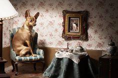 Eva Diez  www.evadiez.es Animal Photography, Animals, Art, Pet Photography, Fotografia, Art Background, Animales, Nature Photography, Animaux