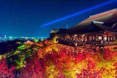 """ライトアップされた""""清水寺の紅葉"""" #AutumnFoliage #kyoto #kiyomizudera"""