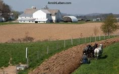 Plowing and planting