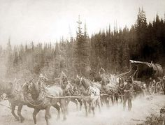 Overland Trail: A team of horses pulling a wagon on the Overland Trail in Alaska in 1900.