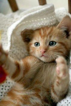 Can I have a 'night-'night hug?