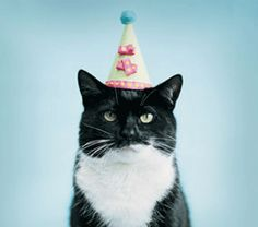 Happy Fucking Birthday - LOLcats is the best place to find and submit funny cat memes and other silly cat materials to share with the world. We find the funny cats that make you LOL so that you don't have to. Crazy Cat Lady, Crazy Cats, I Love Cats, Cool Cats, Amor Animal, Cat Birthday, Funny Birthday, King Birthday, Birthday Wishes