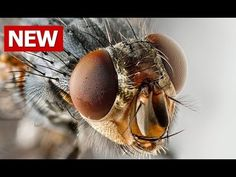 How to Get Rid of Flies, How to Get Rid of House Flies, How to Kill Flies in the House Home Remedies - YouTube