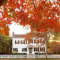 Picturesque fall afternoons... photo via @tsgcharlotte • • • #interiors #interior #designer #designer #designstyle #interiorstyle #interiorstyling #interiordesign #hometour #housetour #interiorinspiration #architecture #instadesign #inspo #fallviews #whitehouse #homedecor #interiorinspiration #adlovers #decorlovers #love #beautiful #charming #instagood #instyle #instaphoto #instagram #blogger #photooftheday #home #homestyle