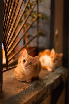 MostlyCatsMostly - (via Ariel-Cabrera-Foix) Orange Tabby Cats, Ginger Cats, Deviantart, Cute Cats, Dog Cat, Cute Animals, Kitty, Ariel, Windows
