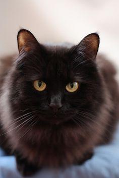 Cat // Selena Chambers