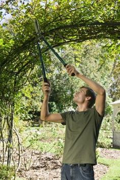 How To Build A Garden Arbor Out Of Branches And Limbs