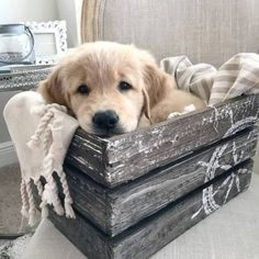 Adorable golden retriever puppy -Becky Palmer- beckymegp - My Doggy Is Delightful Cute Baby Animals, Animals And Pets, Funny Animals, Animals Photos, I Love Dogs, Cute Dogs, Puppies Cute, Cute Animals Puppies, Funny Dogs