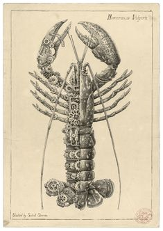 Biomechanical Pencil Drawings of Crustaceans by Steeven Salvat Animal Sketches, Animal Drawings, Pencil Drawings, Illustrations, Illustration Art, Steampunk Kunst, Ancient Paper, Mechanic Tattoo, Biomechanical Tattoo