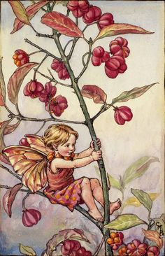 See the rosy-berried Spindle All to sunset colours turning, Till the thicket seems to kindle, Just as though the trees were burning. While my berries split and show Orange-coloured seeds aglow, One by one my leaves must fall: Soon the wind will take them all. Soon must fairies shut their eyes For the Winter's hushabies; …