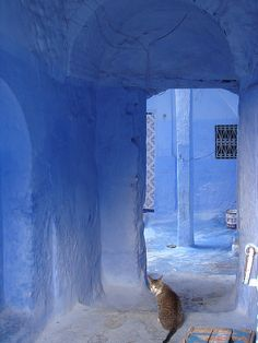 Crazy hump day working in LA. Wish we were chilling like this cool cat in the Blue City of Morocco - Chefchaouen. Just a little east of Tangiers. Sounds exotic doesn't it? We will meet you there. in our travel ready She Bird clothing! Kind Of Blue, Love Blue, Blue And White, Azul Indigo, Indigo Blue, Indigo Walls, Blue Walls, Blue Dream, Periwinkle Blue