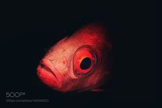 Untitled by zalsager #nature #photooftheday #amazing #picoftheday #sea #underwater