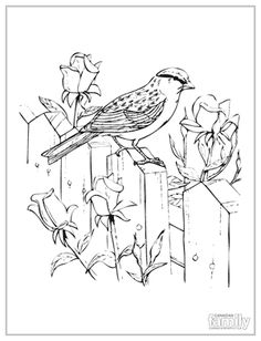 Chipping Sparrow and Roses Coloring page Make your world more colorful with free printable coloring pages from italks. Our free coloring pages for adults and kids. Diy Coloring Books, Bird Coloring Pages, Printable Adult Coloring Pages, Kids Colouring, Mandala Coloring, Free Coloring, Coloring Sheets, Bird Embroidery, Bird Drawings