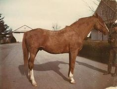 Bolero: Not only did he set 2 world sprint records, a track record, this 1946 Eight Thirty son had a staggering 24 foal crops with lifetime earnings of nearly $8M.  One notable son:  Kathy Kusner's Olympic & world champion jumper, Untouchable.