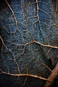 texture-Skin, by micStephens. Decaying Gunnera Manicata leaves after the frozen winter.