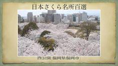 【(Japan)日本さくら名所百選】西公園(福岡県福岡市)[Beautiful cherry blossoms in Japan]