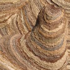 - Wasp Nest, Antelope Canyon, Mother Earth, Nests, Statues, Google Search, Effigy