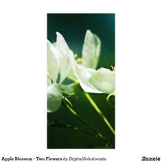 Apple Blossom - Two Flowers Card
