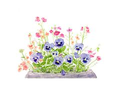 Pansies by Kathleen Maunder