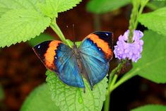Tours of the Merlin Butterfly Sanctuary are available every Monday, Wednesday and Fridays at am. Children and adults can learn about the butterfly life-cycle and see many species. Family Friendly Resorts, Butterfly Life Cycle, Phuket, Resort Spa, Merlin, Vacation, Beach, Wednesday, Thailand