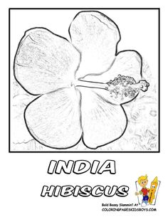 India Hibiscus Flower Coloring Page