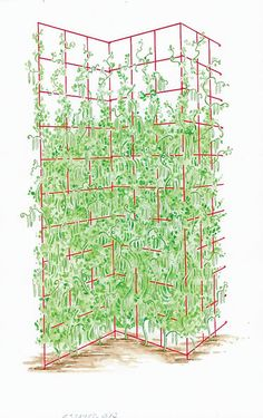 Three Panel Trellis -- giving this a try for my vines that are growing along a new fence. Garden Trellis, Garden Fencing, Garden Landscaping, Outdoor Projects, Garden Projects, Arco Floral, Espalier, Garden Structures, Plantation