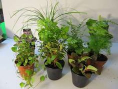 Ideal plants for terrariums from StormTheCastle.com. A treasure trove of ideas.