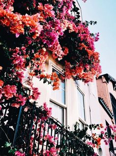 Blumen & Blüten floral house vines Acne And The Changes In Girls During Puberty During Flowers Nature, My Flower, Beautiful Flowers, City Flowers, Spring Flowers, Garden Care, Vines, Balkon Design, Flower Aesthetic